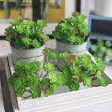 Micro Landscapes Simulations PVC Succulents Glass Vase Fake Plants Decorations