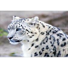 Papier peint géant guépard blanc1452