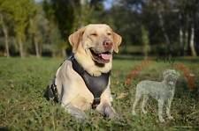 Pettorina da lavoro per cani di servizio, resistente, confortevole, regolabile