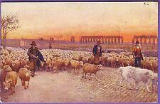 ITALY ETHNIC FARMERS SHEEP DRIVE POSTCARD
