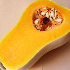 Butternut Squash-Metro (Hybrid) - 9 sementi [.. piccoli frutti / Muffa Resistente ]