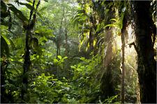 Foto Poster / Kunstdruck Sonnenstrahlen im Dschungel - Peter Schickert