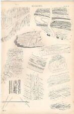 1868 PRINT GEOLOGY SANSTONE GREENSTONE QUARTZ STRING &C