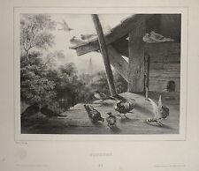 1840-PIGEONS-I PICCIONI-LEMERCIER-LITOGRAFIA ORIGINALE-NEWTON FIELDING
