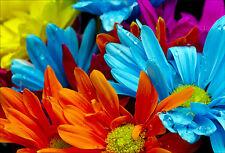 Stickers muraux autocollant déco : Fleurs couleur - réf 1467 (16 dimensions)