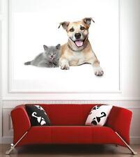 Affiche poster décoration murale Chien Chat réf 58877705 (6 dimensions)