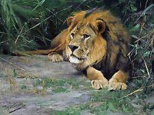 africa lion in the grass W. Spielende Tile Mural Wall Backsplash Marble Ceramic