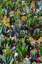 3D plant cactus flower Risers Decoration Photo Mural Vinyl Decal Wallpaper US