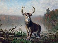 ON THE ALERT by A. Tait animal deer Tile Mural Kitchen Backsplash Marble Ceramic