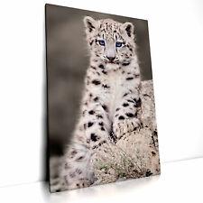 Kleiner Leopard, Leinwand Bild auf Keilrahmen, Poster Wandbild Tier Baby 02.1001