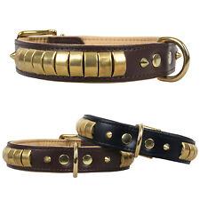 Collier en cuir chesmu gold-messing CUIR COLLIER DE CHIEN collier pour chien