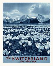 POSTER SEE SWITZERLAND IN SPRING CROCUS ALPINE FLOWERS VINTAGE REPRO FREE S/H