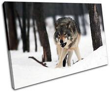 White Wolf Wild Animals SINGLE TOILE murale ART Photo Print