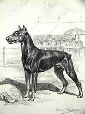 Megargee Doberman Pinscher 1953 Dog Art Print Matted