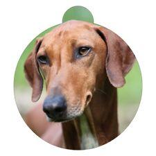 Azawakh Breed Picture Pet ID tag