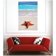 Affiche poster plage étoile de mer  5511393