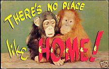 Young ORANG UTAN and CHIMP, Ape, Monkey (1959)