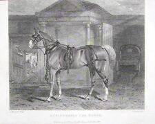1832-CAVALLO DA DILIGENZA-CELEBRATED CAB HORSE-CARRIAGE-INCISIONE ORIGINALE