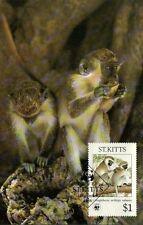 (70504) Maximumkarte - St Kitts - Grün Affe - 1986