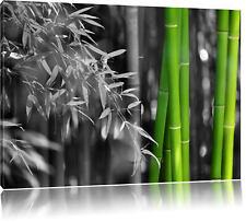 frischer Bambus schwarz/weiß Leinwandbild Wanddeko Kunstdruck