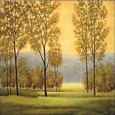 Neil Thomas: Misty Morning I Keilrahmen-Bild Leinwand Bäume Wald