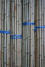 Bambusrohr  2-3 cm 2m Bambusrohre Bambusstange Bambusstangen Bambushalm Bambus