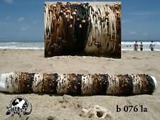 Venta Por Mayor 10 Mix Set Cable & del grano Pulseras Surf / b076la