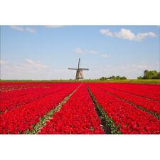 Papier peint géant champs de fleurs rouge1445