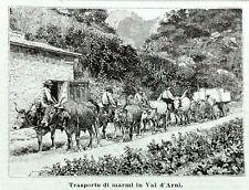 1893 Incisione TRASPORTO MARMI IN VAL D'ARNI VALDARNO