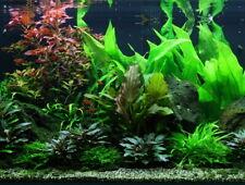 Mitte Set mit 6 Tropica Topf Pflanzen Aquariumpflanzenset Mittelgrund