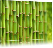 Grüner frischer Bambus  Leinwandbild Wanddeko Kunstdruck