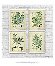 Farmhouse Wall Decor set of 4 unframed art vintage botanical art Olive Plants