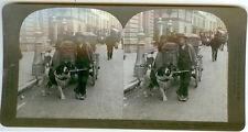 STEREOVIEW DOG PULLING CART SWITZERLAND