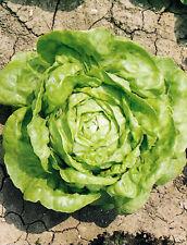 ( 351) 'KINGS'  PREMIER QUALITY lettuce leaf salad arctic king  -4000 seeds