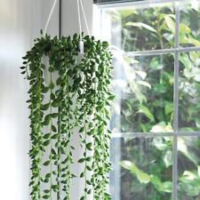 Senecio String of Pearls Hanging House Plant Indoor Greenery 14cm Plants T&M