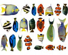 Fischaufkleber Set Wandtattoo 22 teiliges Sticker mehrfarbig  3 Größen