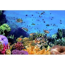 Stickers muraux déco : poissons tropicaux 1526
