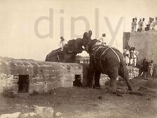 REPRO DECO PHOTO INDE COMBAT ELEPHANTS 1890 SUR PANNEAU MURAL BOIS HDF