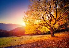 13056 -Wald Sonnenuntergang Island Fluß Gebirge VLIES Fototapete-WASSERFALL-
