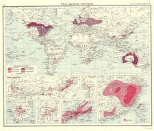 Old World Map - Global Tea Production - Newnes 1907 - 23 x 26.94