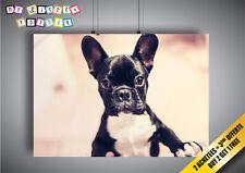 Poster Cane Il Bulldog Francese Curioso