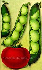 Lima Beans & Tomato ~ Burpee's Vintage Seed Catalog Art ~Cross Stitch Pattern