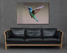 Hummingbird Flying Bird Beautiful Print Canvas Art Living Room Large Blue Purple