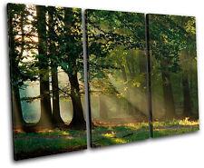Forest Landscapes TREBLE LONA pared arte Foto impresion