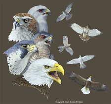 Adult Cotton T Shirt Soaring Raptors Eagle Hawk