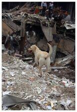 World Trade Center 9/11 Working Rescue Dog Silver Halide Photo - Ver 1