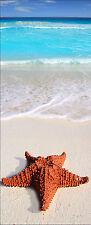 Affiche poster porte déco trompe l'oeil Etoile de mer réf 753 - 4 dimensions