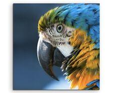 Tierfotografie – Ara im Portrait auf Leinwand
