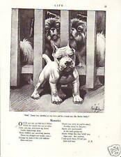 1922 Robert Dickey Tough Guy Pit Bull Terrier