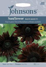 Johnsons Seeds Sunflower Black Magic F1 Seed - Short Habit!